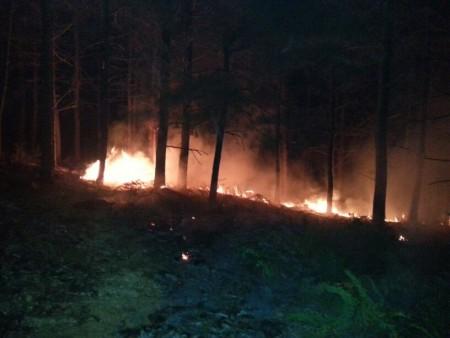 آتشسوزی در جنگلهای شفت مهار شد