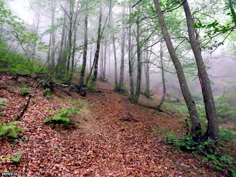 تصاویری از جنگل و ییلاق اطراف امامزاده ابراهیم شفت