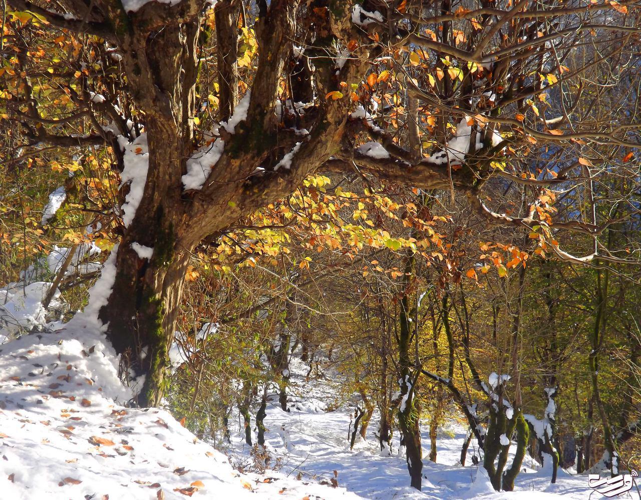 پاییز هزار رنگ و زمستان زودرس در گنجار شفت