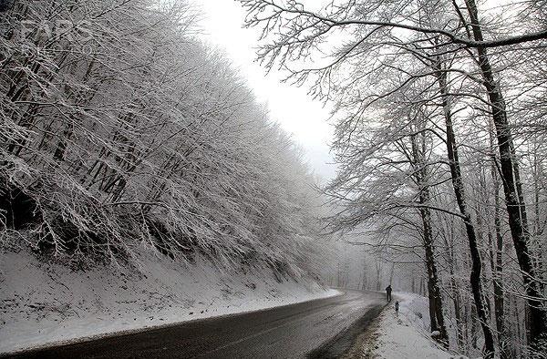 برف شهرستان شفت را سپید پوش کرد