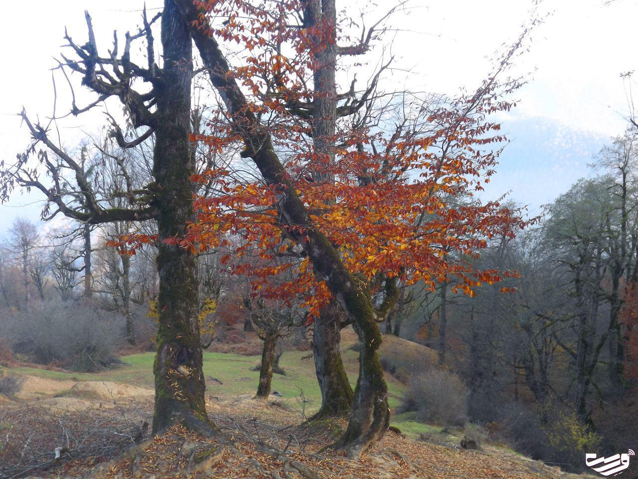 پاییز هزار رنگ در ارتفاعات سیاهمزگی شفت