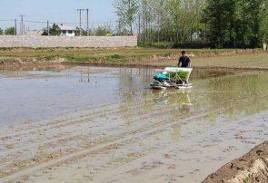 بازدید فرماندار شفت از نشای مکانیزه برنج در روستای کمسار