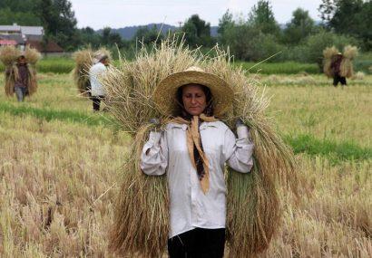 کار بدون مزد زنان ؛ ازخودگذشتگی یا بهرهکشی