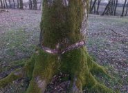 دوربری درختان ؛ ترفند کثیف متصرّفان جنگل های ملی